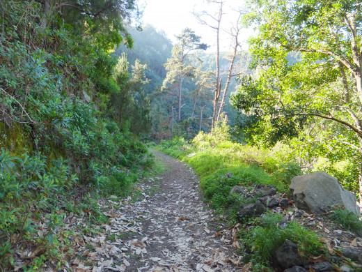 Pathway on the cooler and greener side of Barranco de Ruiz