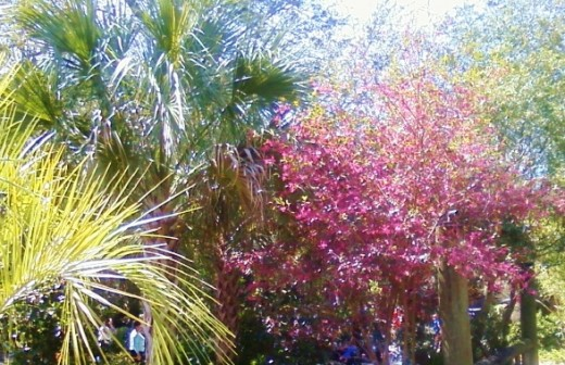 Palms and flowering trees greet the visitor near the Main Camp.