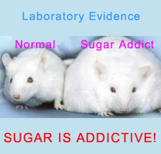 Why test on rats when the evidence is so clear in obese humans already!