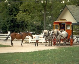 Carriage Rides are a Nice Break from Walking (copyright Donna Campbell Smith)