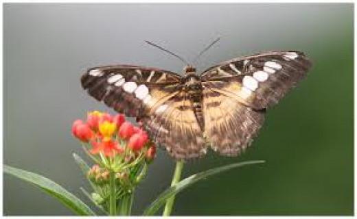 Schmetterling (9907)