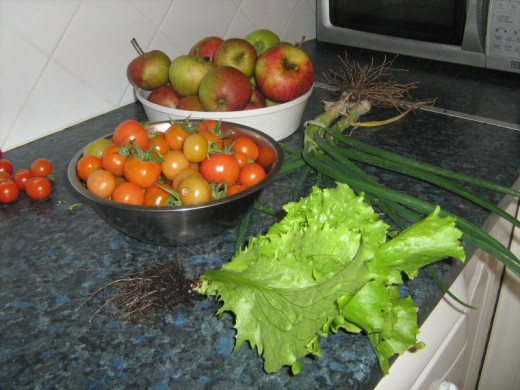 Ahead of lettuce I picked from my own garden. the tomatoes, apples and scallions in the photo were also grown my myself in the garden.