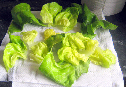 how to clean lettuce from the garden