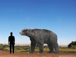 Arctotherium comparison to man.