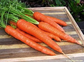 Leave the final winter carrots in the garden until needed.
