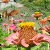 How to Choose the Right Plants for Your Southern Garden for the Most Colorful Impact in Sun or Shade