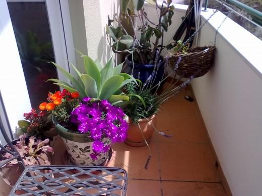 My balcony garden in Spain after winter