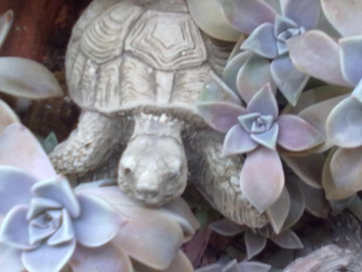 Is he trying to escape? A terracotta turtle hiding in the plants.