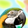 Gazzman91 profile image
