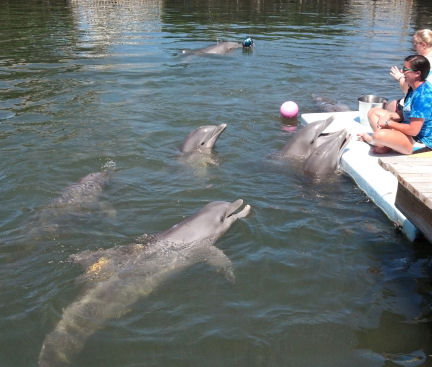 "Not all sessions between trainers and dolphins are structured - some are simply ""playtime!"""