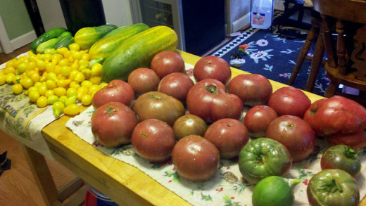 Black Krim and Yellow Pear tomatoes freshly picked from my garden