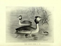 British Birds with their Nest and Eggs --Butler 1896
