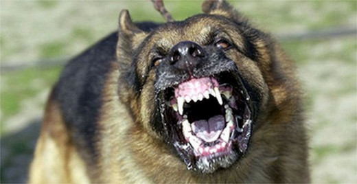 A Scary And Aggressive Dog
