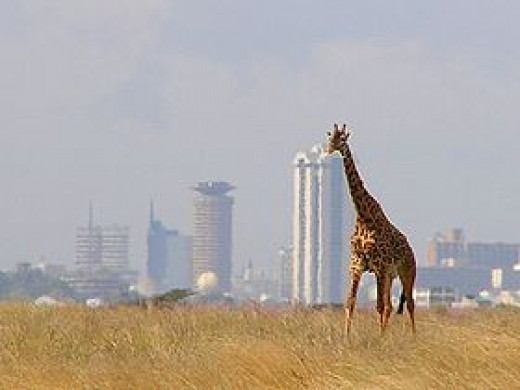 View of the skyline, this is near the entrance of the park, where giraffes seem to be hiding in the trees ready to greet you.