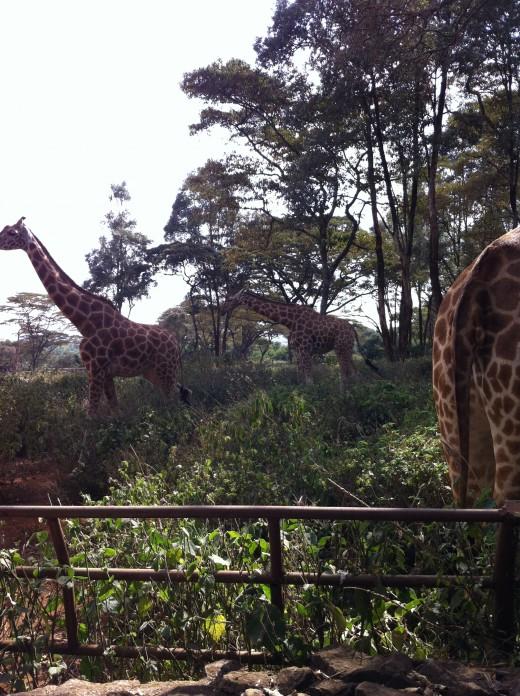 In their habitat