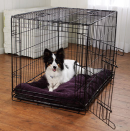 A dog relaxing inside its crate but anytime now it's ready to get out and relieve itself.