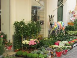 Zebra and flowers outside a shop - Capri Town