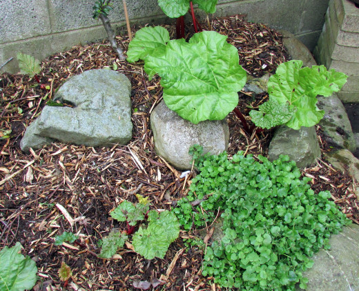 The Rhubarb Season is Nearly Over