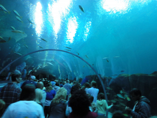 Big Crowds At The Georgia Aquarium