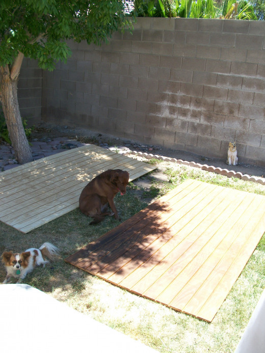 Bella and Maggie watch from the one shady spot in our back yard.