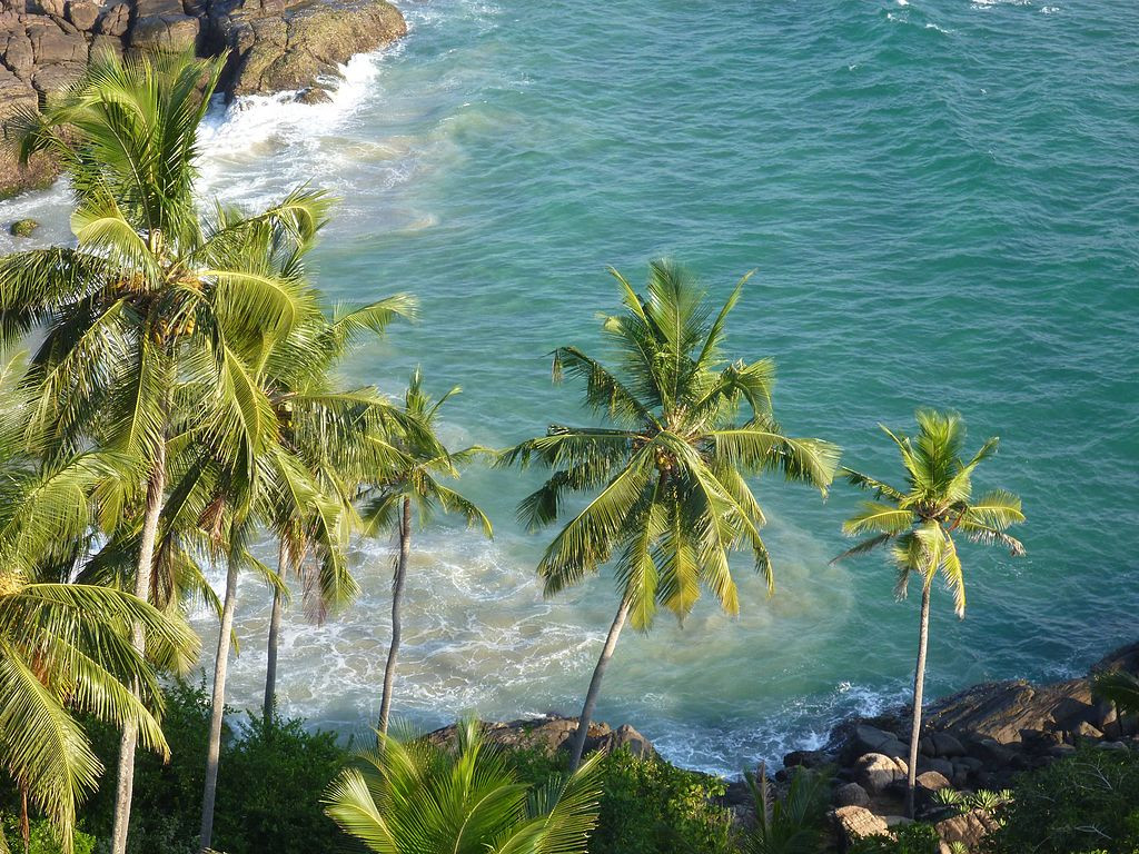 F on Uses Of Coconut Tree Parts