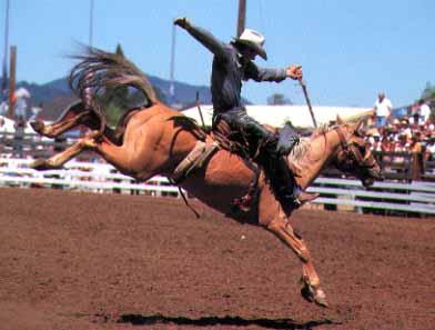 bronco saddle riding