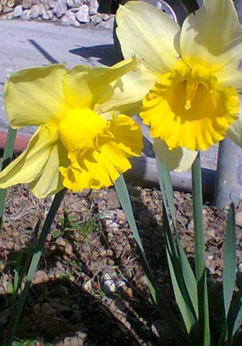 Yellow bulbs