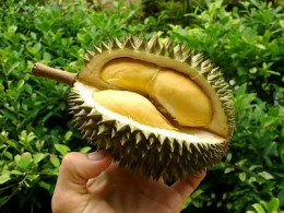 Inside of the Durian fruit.