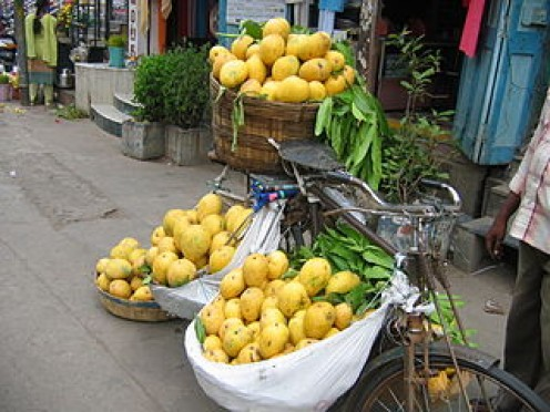 Partially ripened Banganpalli mangoes being sold on a Bicycle at Guntur City, India. These are available from the middle of May to June of the summer season.
