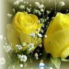 blossomsoflife profile image