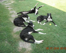 My furkids enjoy their time in the yard.