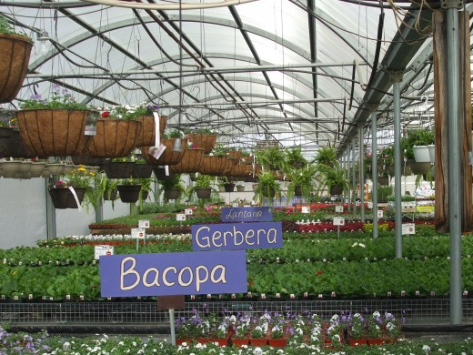Wonderfully large artistic clear signs label plant groups in Frey's family-owned nursery.