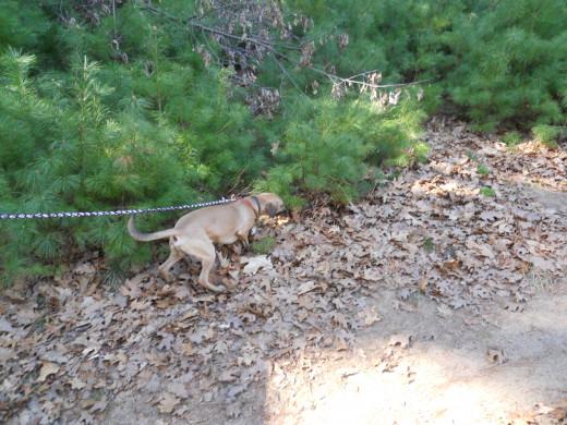 Trail is dog friendly!