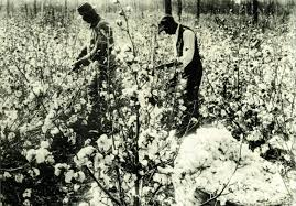 To pick cotton was like going to Heaven