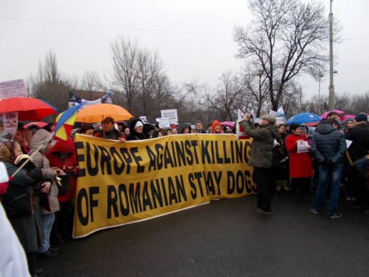 fighting for better Animal Welfare conditions. Bucharest, March 2014