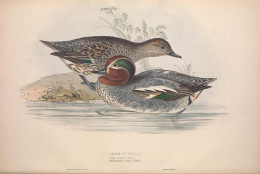 Birds of Europe  --Gould 1837