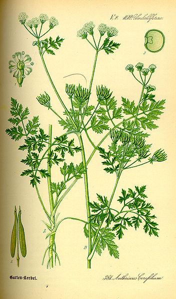 Flors Von Deutschland 1855 {uploaded by Topjabot}