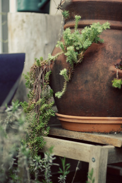Container Gardening Ideas: Vegetable, Flower and Herb Planting Advice