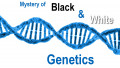 Hiding genes - the mystery of black and white genetics