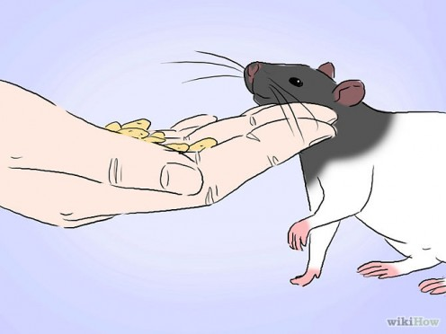 Bonding with your Rats: A Beginner's Guide