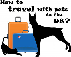 How to travel with pets to the UK?