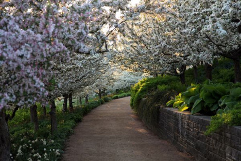 Covered walkways in full bloom