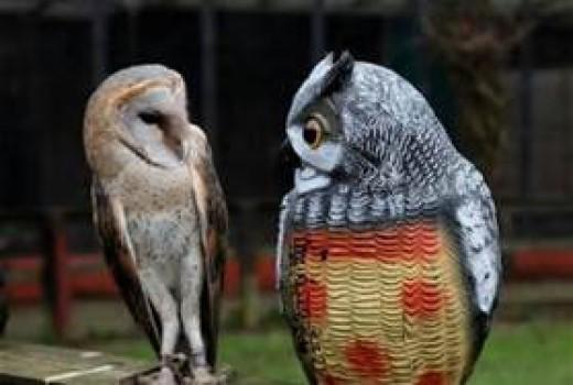 Amusing Owls