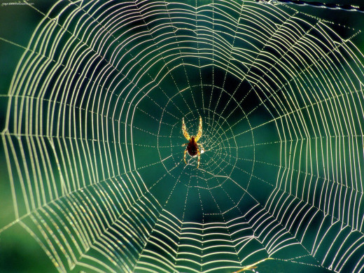 Spiders webs images