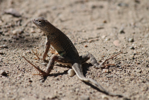 Small animals, such as this amiable lizard, also find refuge at the arboretum.