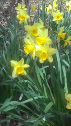 A burst of Spring