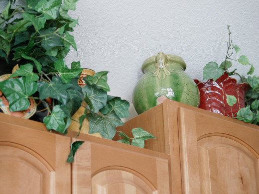 English ivy (on the left) growing as a houseplant