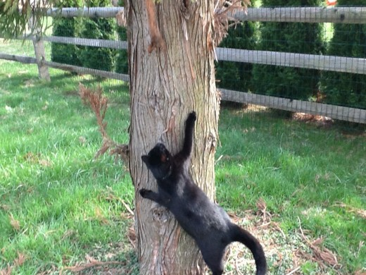 Cats love to climb and will take advantage of this while outdoors