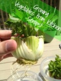 Easy Gardening: Grow Vegetable Plants from Kitchen Scraps!