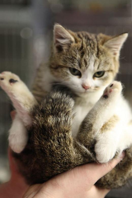 Picture of Random Kitten :)
